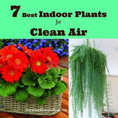 7 best air cleaning plants for home garden indoor air purification - Best plants for home ...