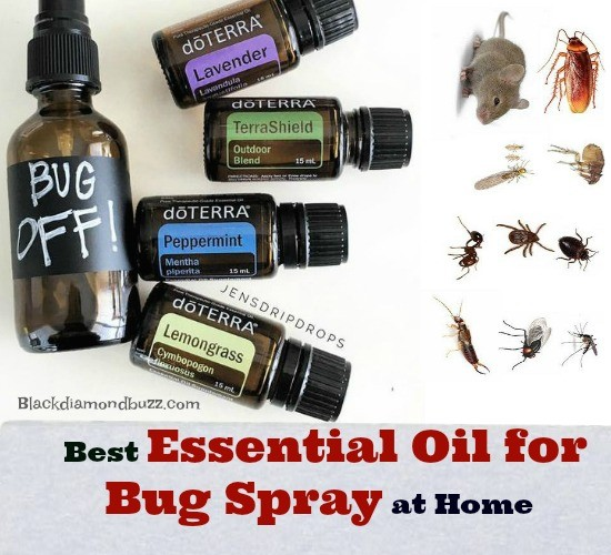 7 Best Essential Oil For Bug Spray At Home Mosquitoes Bed